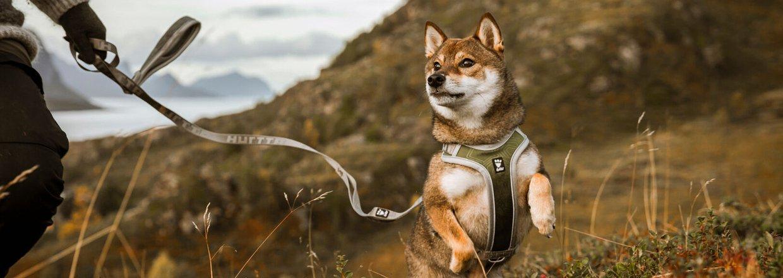 Hurtta - til den aktive hund